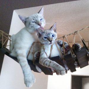 Мост для кошек «Индиана Джонс»